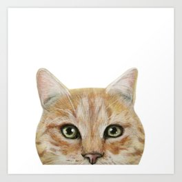 Golden British shorthair, America shorthair, cat, acrylic illustration by miart Art Print