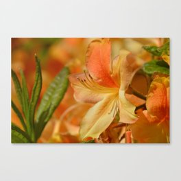 Orange Explosion Canvas Print