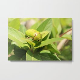 Green Beetle on a Leaf Metal Print