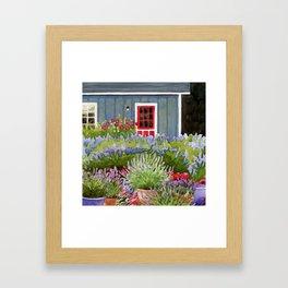 Pots of lavender Framed Art Print