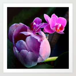 Purple Tulip With Baby Moths Art Print