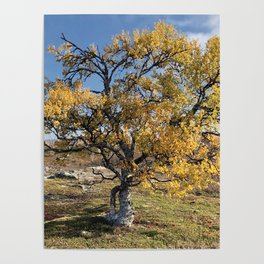 Yellow Tree in the mountains Poster