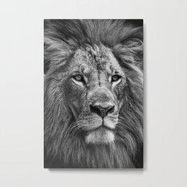 The Lion Portrait (Black and White) Metal Print