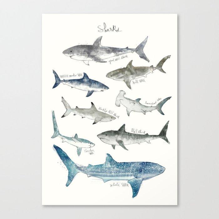 Sharks Leinwanddruck
