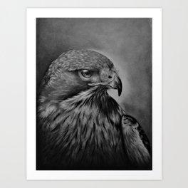 Hawk Pencil Drawing Art Print