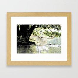 Swan Lake Part two. Framed Art Print