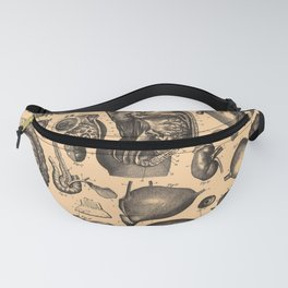 Iconographic Encyclopedia of Science, Literature and Art (1851) - Human Internal Anatomy Fanny Pack