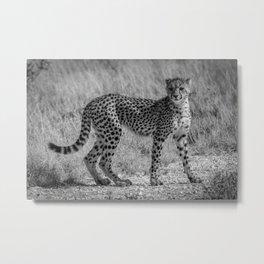 B&W Cheetah Cub Metal Print