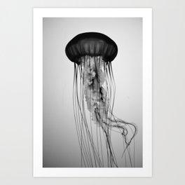 Jellyfish Black and White Art Print