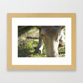 Mary @ Happy Hooves Farm Sanctuary Framed Art Print