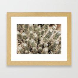 Desert Cactus Garden  | Modern Botanical Photography | Nature Framed Art Print