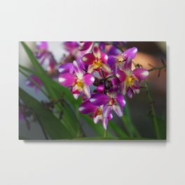 Mom's Magenta Grass Orchids Metal Print