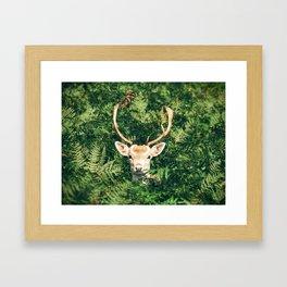 deer cerf 4 Framed Art Print