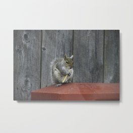 Squirrel french fry Metal Print