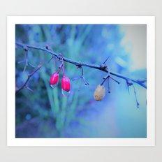 little red berries Art Print