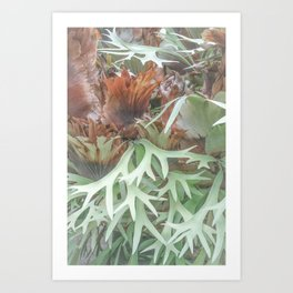 Ethereal Elkhorn Art Print