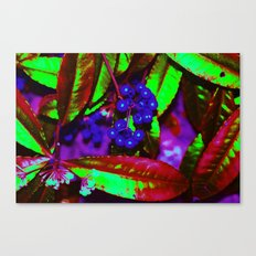 WONKA berries Canvas Print