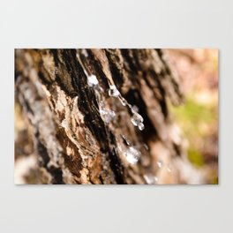 Tree Bark Macro Canvas Print