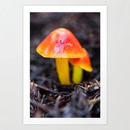 Fungi of My Dreams Art Print