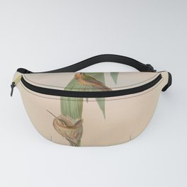 Vintage Print - A Monograph of the Hummingbirds (1849) - Pigmy Hermit Fanny Pack