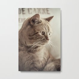 my cat Metal Print