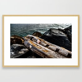 Shell on a Log Framed Art Print