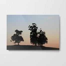Eucalyptus trees at sunset Metal Print