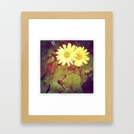 Fading Daisies Framed Art Print