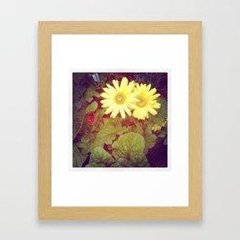 Fading Daisies Framed Art Print
