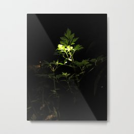 Nighttime in the Garden, 3 Metal Print