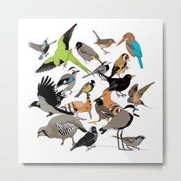 color birds Metal Print