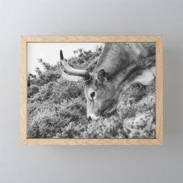 Portrait of a beautiful female cow Framed Mini Art Print