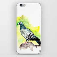 pigeon iPhone & iPod Skins featuring Pigeon by Elena Sandovici