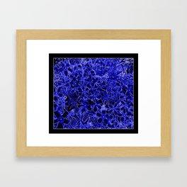 Flower   Flowers   Royal Blue Flox on Black Framed Art Print