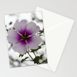 Blooming Tree Mallow Stationery Cards