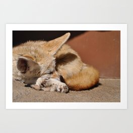 Fennec Fox at the Virginia Norfolk in Norfolk Art Print