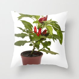 Shrub decorative pepper Kapsicum on a white background Throw Pillow