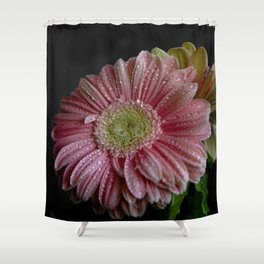 Gerbera spring Shower Curtain
