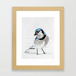 Blue Jay (Cyanocitta cristata) Framed Art Print