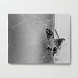 Flies Trapped In a Spider´s Web Metal Print