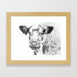 Ardnamurchan Coo Framed Art Print