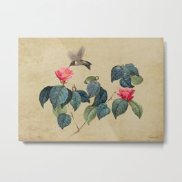 Hummingbird and Japanese Camillea Metal Print