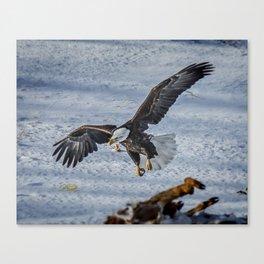 Eagle over deer Canvas Print