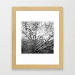 #94 Framed Art Print