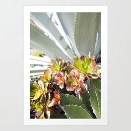 Succulent Layers Art Print