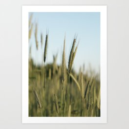 A rich crop Art Print