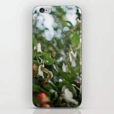 Crab Apple Tree iPhone & iPod Skin