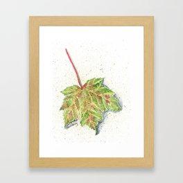 MAINE MAPLE LEAF Framed Art Print