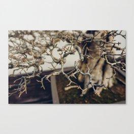 Pomegranate Bonsai Branches Canvas Print