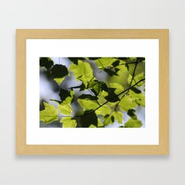 Light through the Trees Framed Art Print